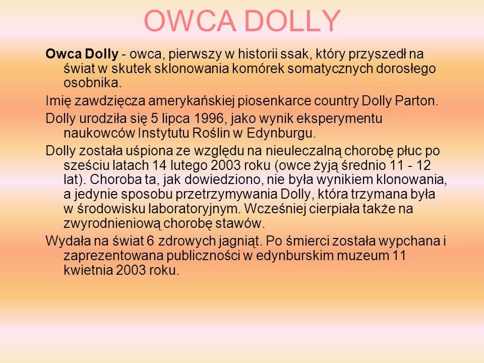 OWCA DOLLY Owca Dolly - owca, pierwszy w historii ssak, który przyszedł na świat w skutek sklonowania komórek somatycznych dorosłego osobnika.
