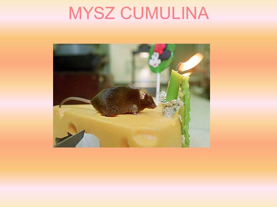 MYSZ CUMULINA