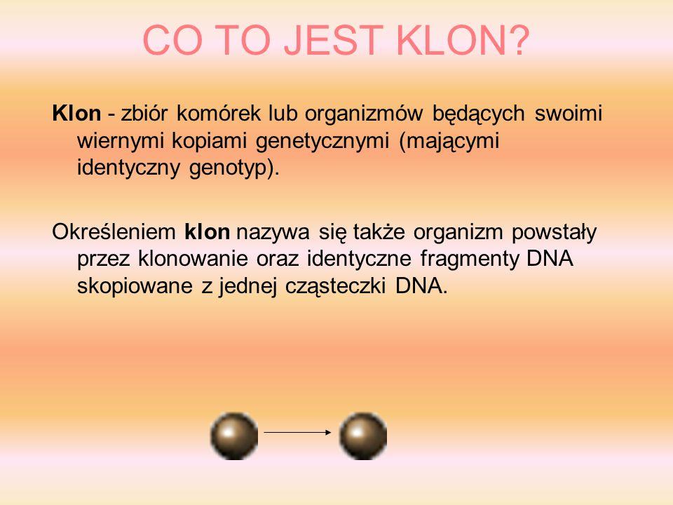 CO TO JEST KLON Klon - zbiór komórek lub organizmów będących swoimi wiernymi kopiami genetycznymi (mającymi identyczny genotyp).