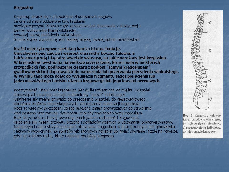 Kręgosłup Kręgosłup składa się z 33 podobnie zbudowanych kręgów. Są one od siebie oddzielone tzw. krążkami.