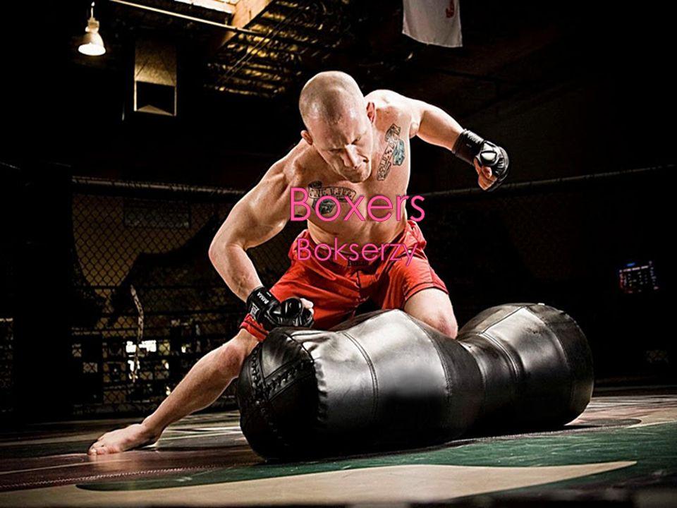 Boxers Bokserzy