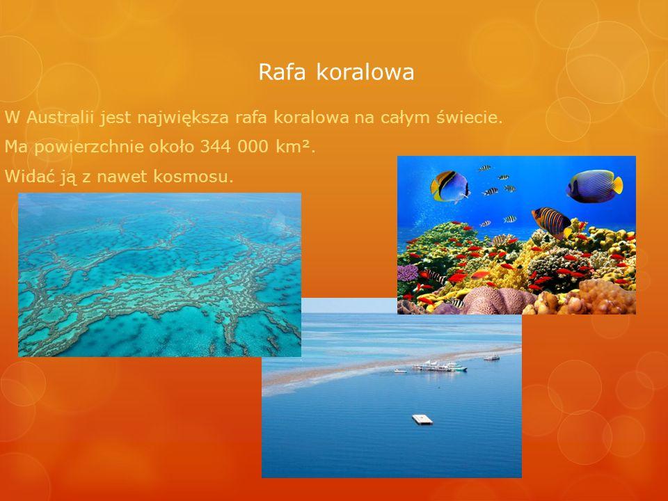 Rafa koralowa W Australii jest największa rafa koralowa na całym świecie. Ma powierzchnie około 344 000 km².