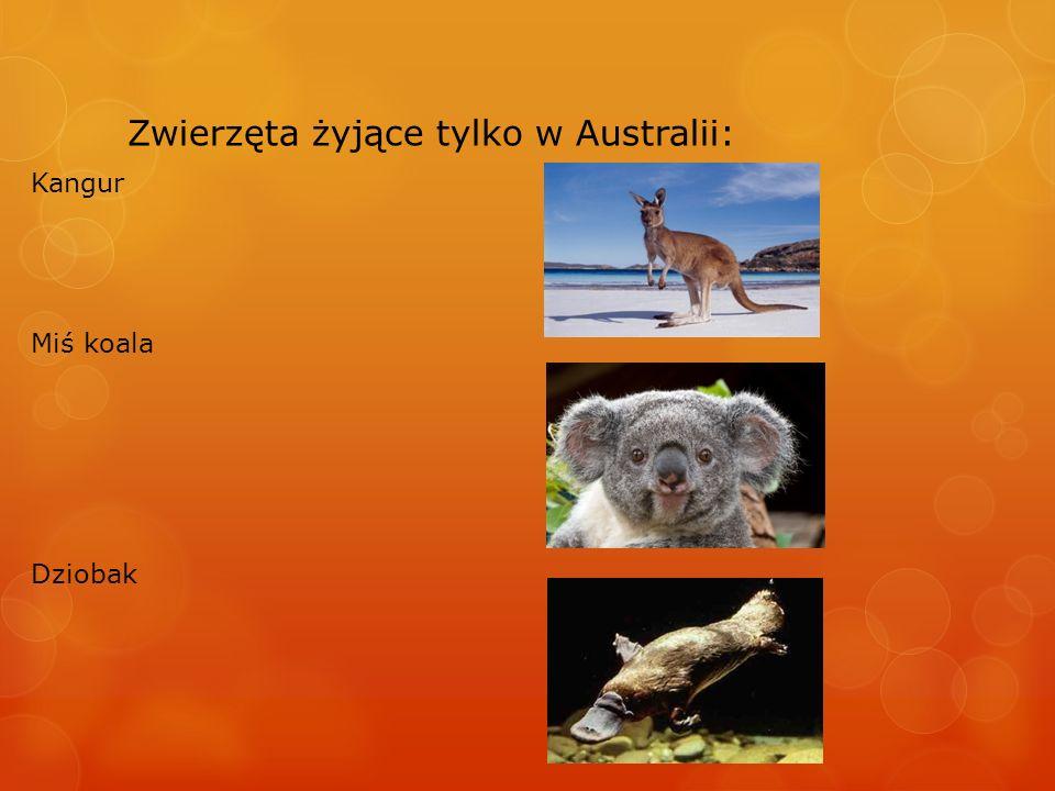 Zwierzęta żyjące tylko w Australii: