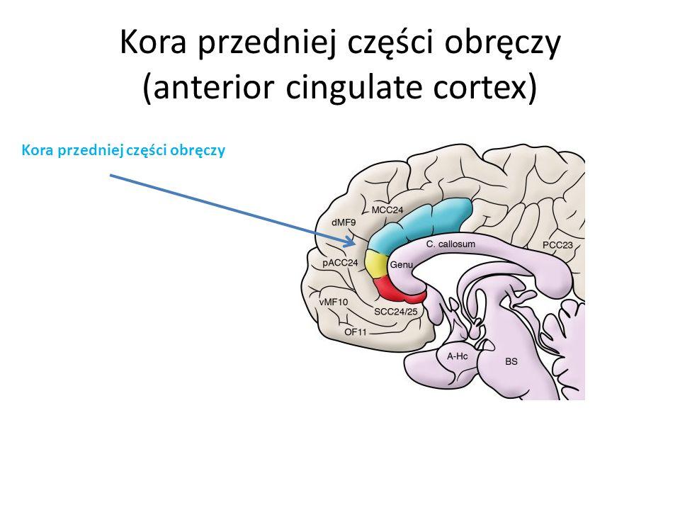 Kora przedniej części obręczy (anterior cingulate cortex)