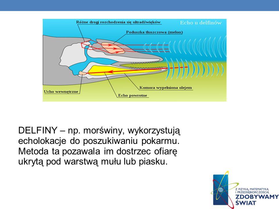 DELFINY – np.morświny, wykorzystują echolokacje do poszukiwaniu pokarmu.