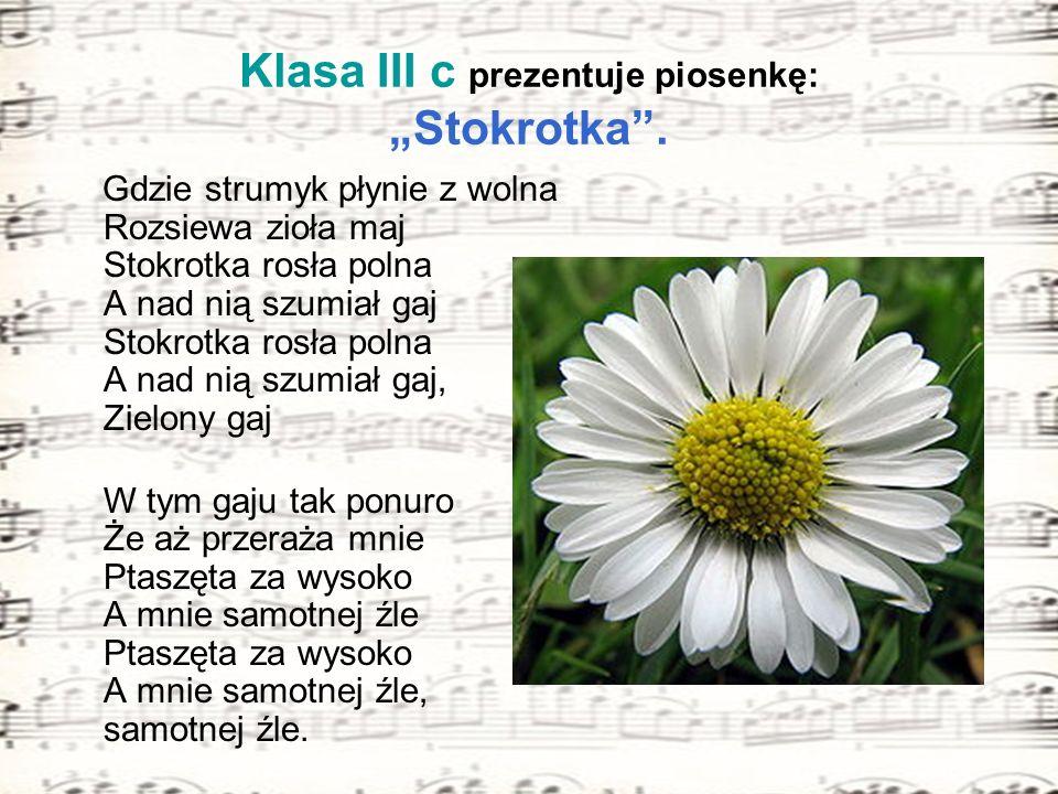 """Klasa III c prezentuje piosenkę: """"Stokrotka ."""