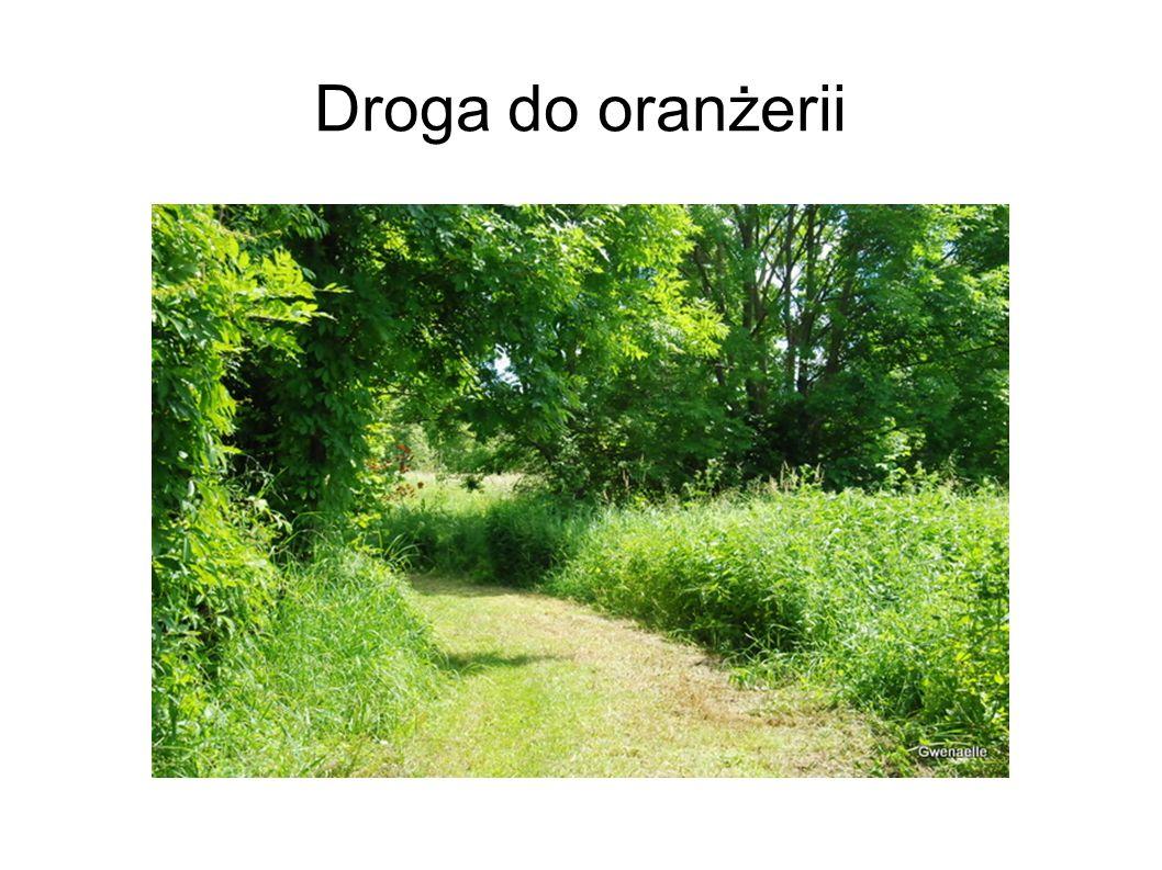Droga do oranżerii