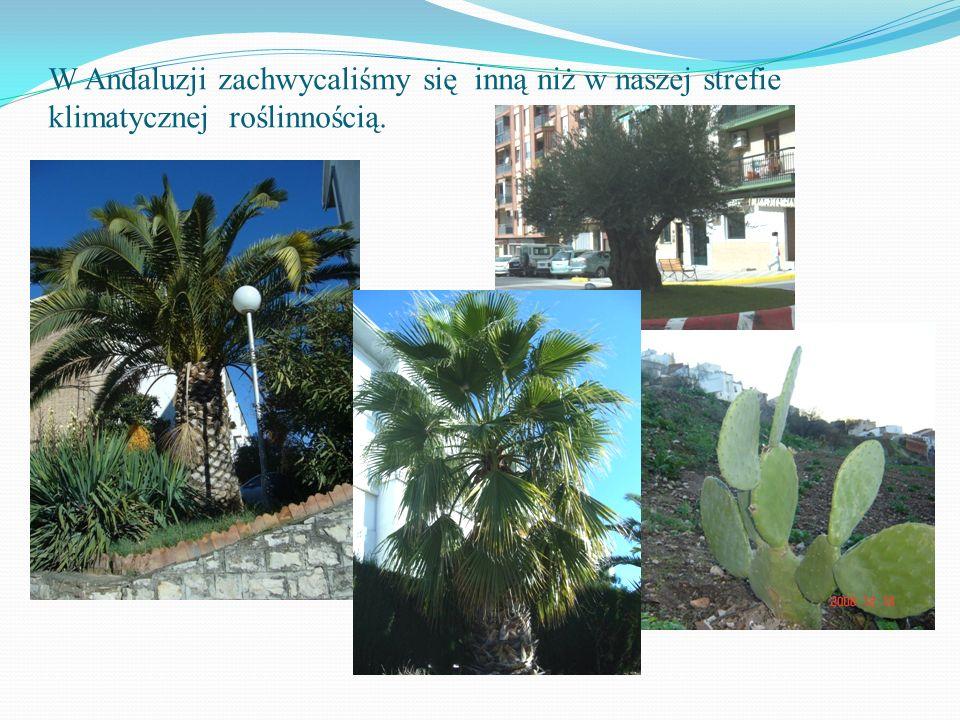 W Andaluzji zachwycaliśmy się inną niż w naszej strefie klimatycznej roślinnością.