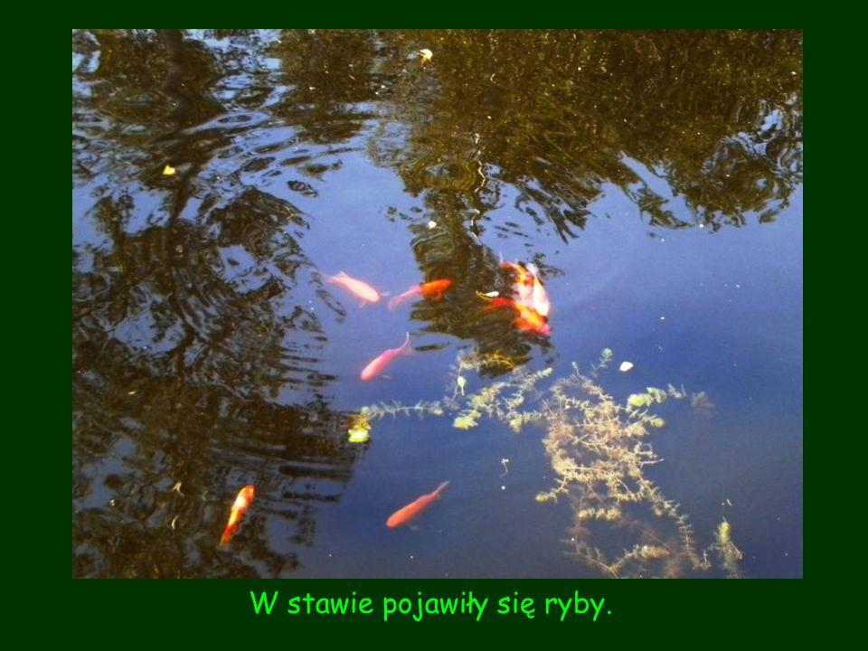 W stawie pojawiły się ryby.