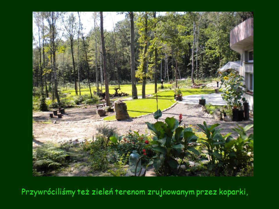 Przywróciliśmy też zieleń terenom zrujnowanym przez koparki,