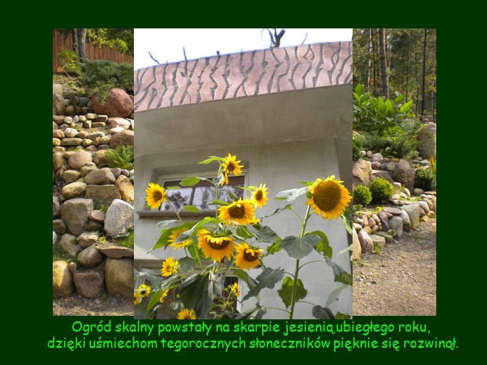 Ogród skalny powstały na skarpie jesienią ubiegłego roku,