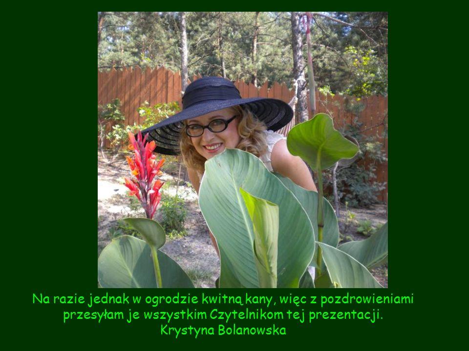 Na razie jednak w ogrodzie kwitną kany, więc z pozdrowieniami