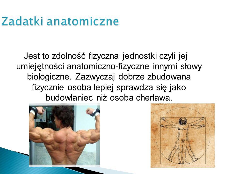 Zadatki anatomiczne