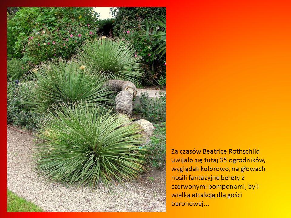 Za czasów Beatrice Rothschild uwijało się tutaj 35 ogrodników, wyglądali kolorowo, na głowach nosili fantazyjne berety z czerwonymi pomponami, byli wielką atrakcją dla gości baronowej...