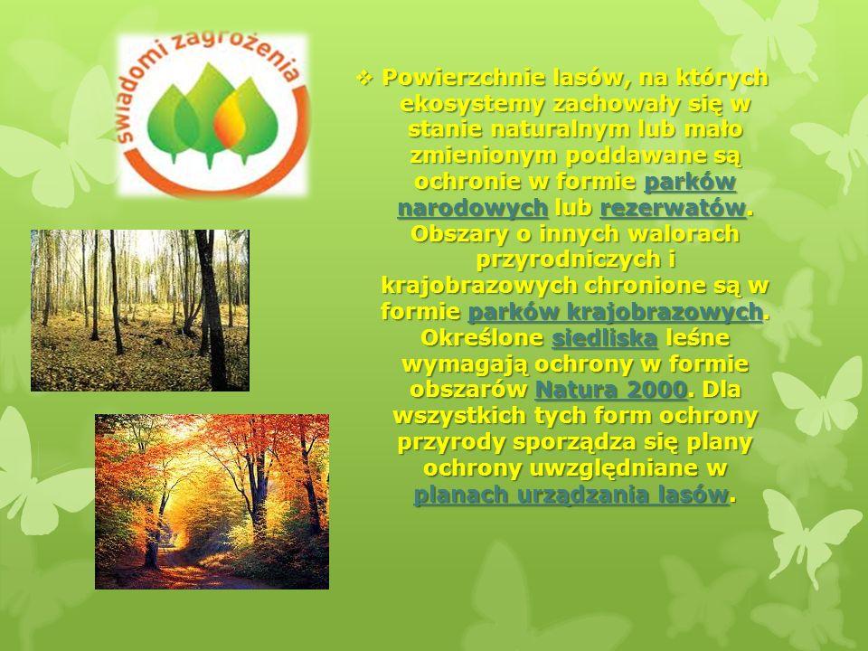 Powierzchnie lasów, na których ekosystemy zachowały się w stanie naturalnym lub mało zmienionym poddawane są ochronie w formie parków narodowych lub rezerwatów.
