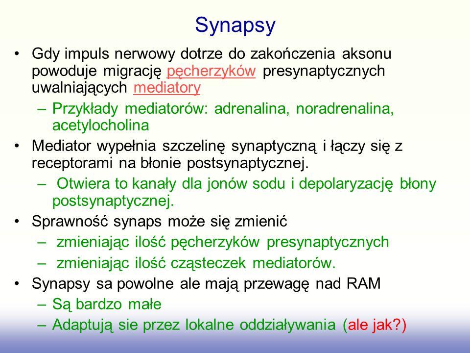 Synapsy Gdy impuls nerwowy dotrze do zakończenia aksonu powoduje migrację pęcherzyków presynaptycznych uwalniających mediatory.