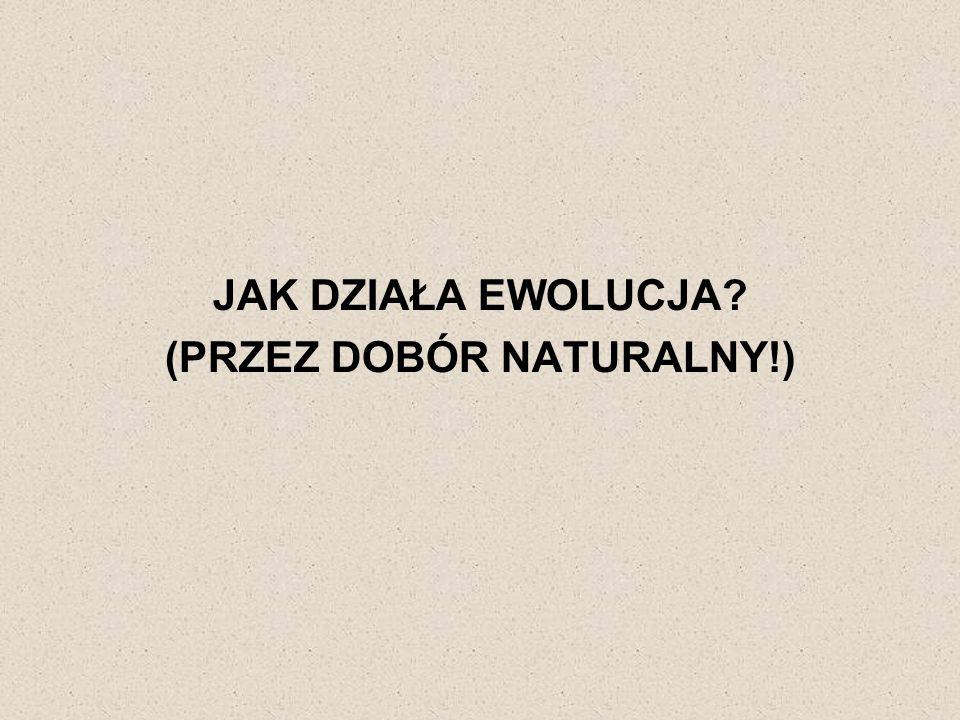 (PRZEZ DOBÓR NATURALNY!)