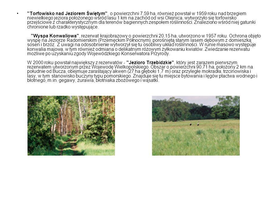 Torfowisko nad Jeziorem Świętym , o powierzchni 7,59 ha, również powstał w 1959 roku nad brzegiem niewielkiego jeziora położonego wśród lasu 1 km na zachód od wsi Olejnica, wytworzyło się torfowisko przejściowe z charakterystycznym dla terenów bagiennych zespołem roślinności.