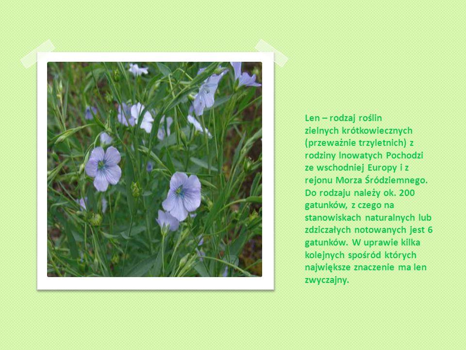 Len – rodzaj roślin zielnych krótkowiecznych (przeważnie trzyletnich) z rodziny lnowatych Pochodzi ze wschodniej Europy i z rejonu Morza Śródziemnego.