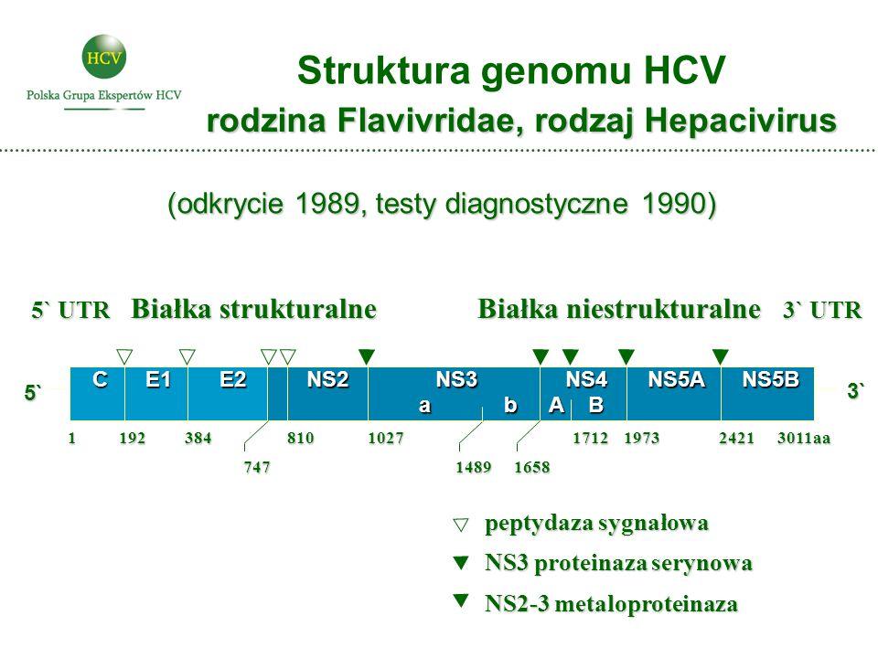 Białka niestrukturalne 3` UTR