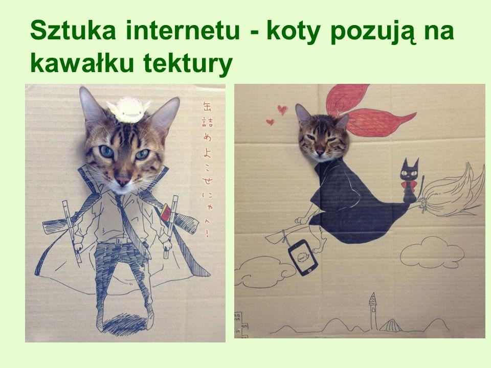 Sztuka internetu - koty pozują na kawałku tektury
