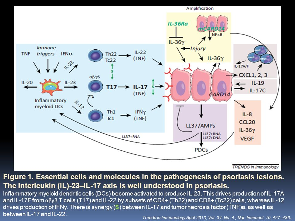 Figure 1. Essential cells and molecules in the pathogenesis of psoriasis lesions. The interleukin (IL)-23–IL-17 axis is well understood in psoriasis. Inflammatory and resident
