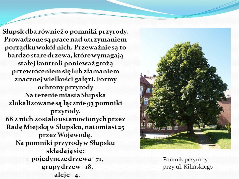 Na pomniki przyrody w Słupsku składają się: