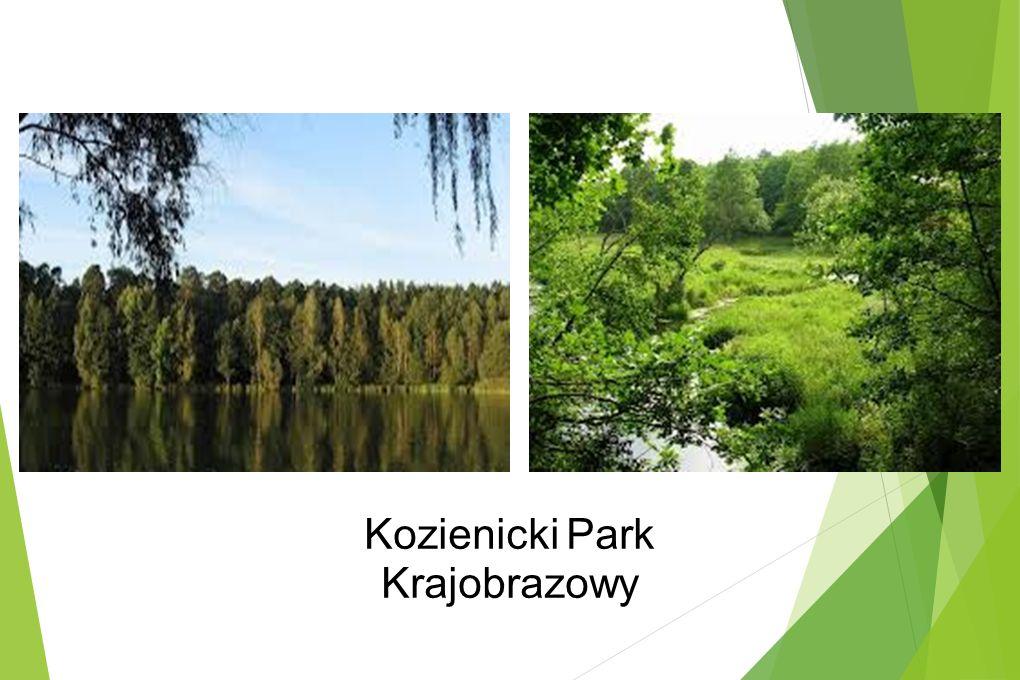 Kozienicki Park Krajobrazowy