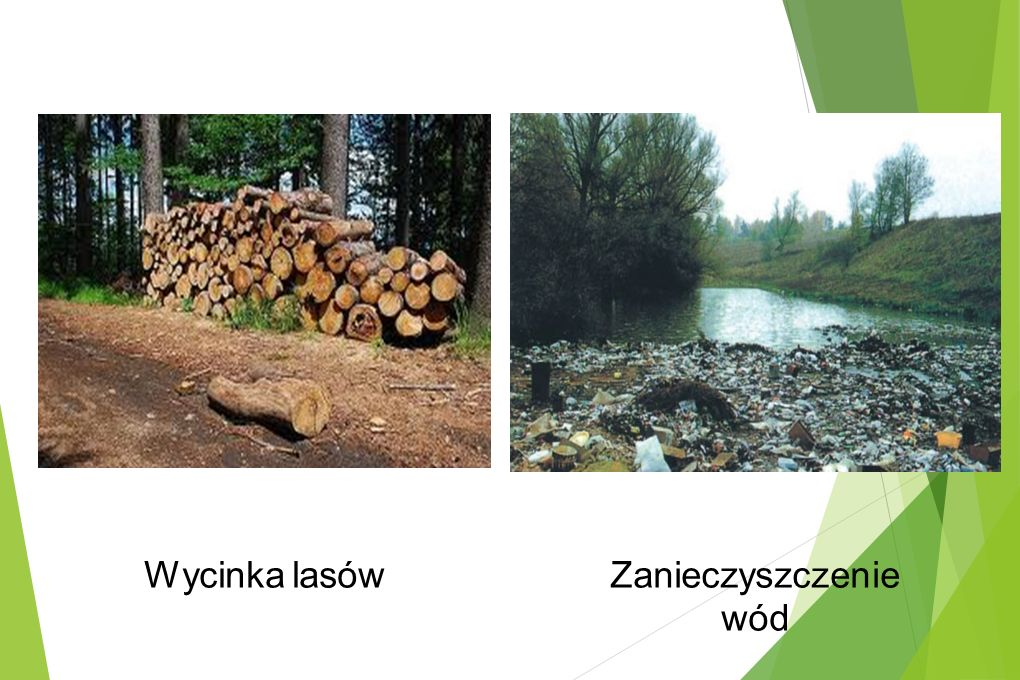 Wycinka lasów Zanieczyszczenie wód