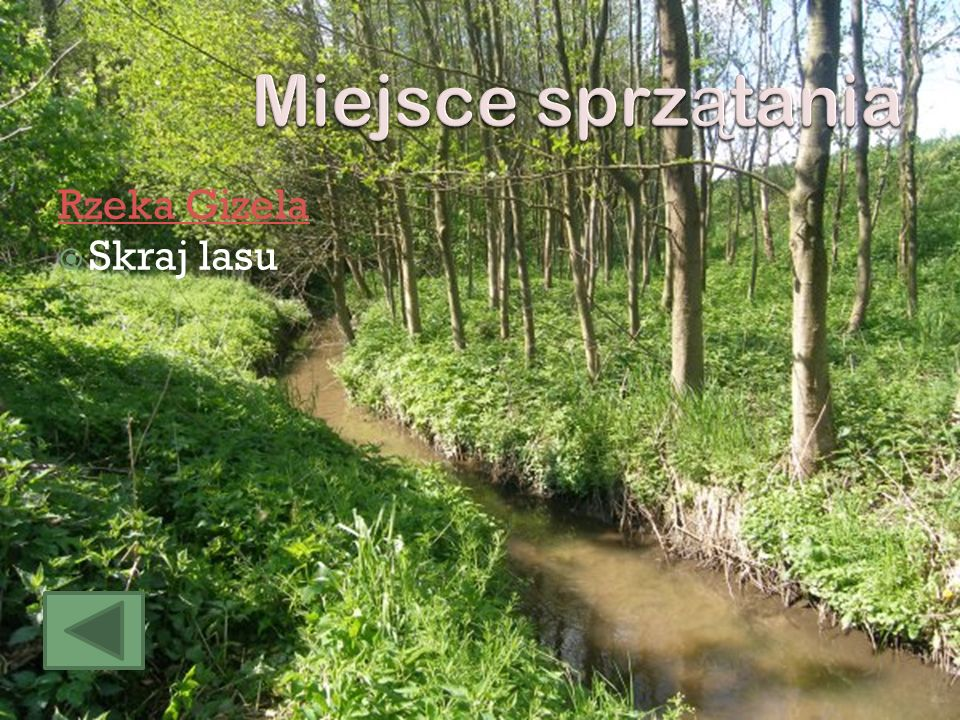 Miejsce sprzątania Rzeka Gizela Skraj lasu