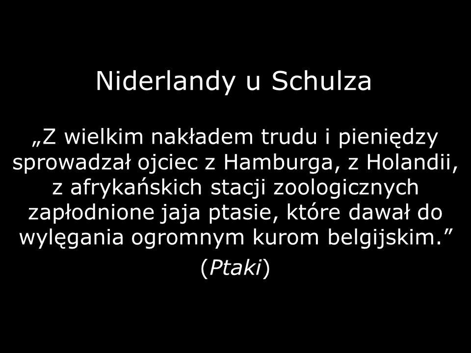 Niderlandy u Schulza
