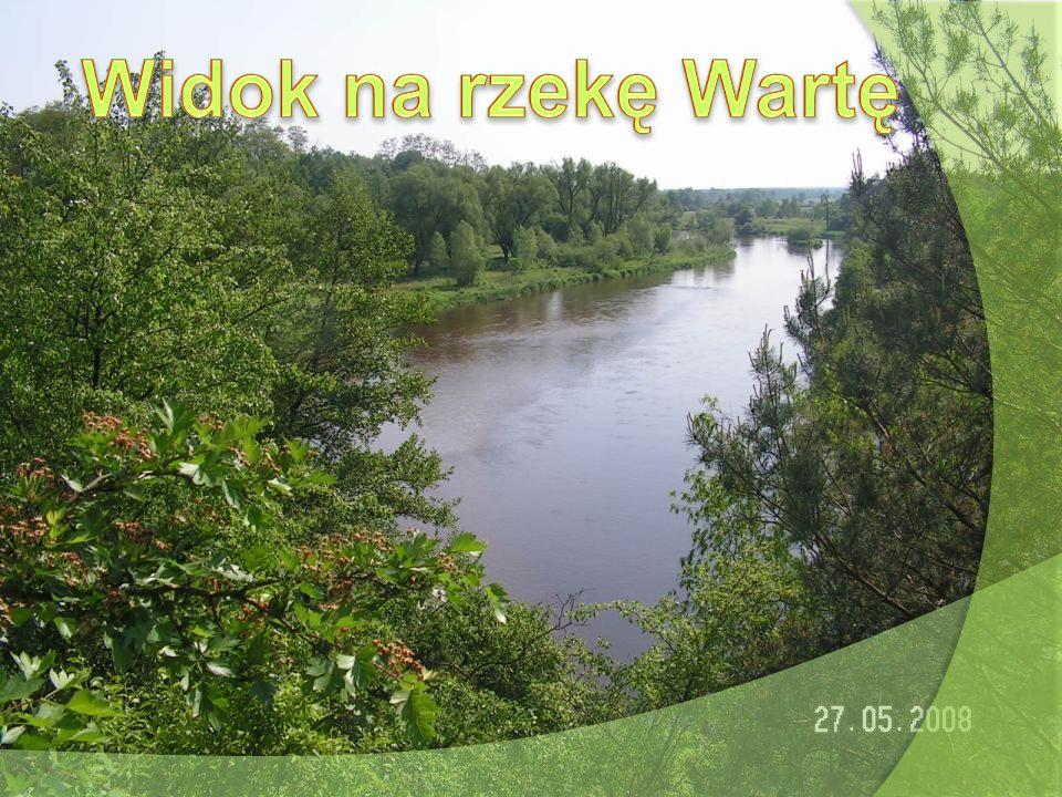 Widok na rzekę Wartę