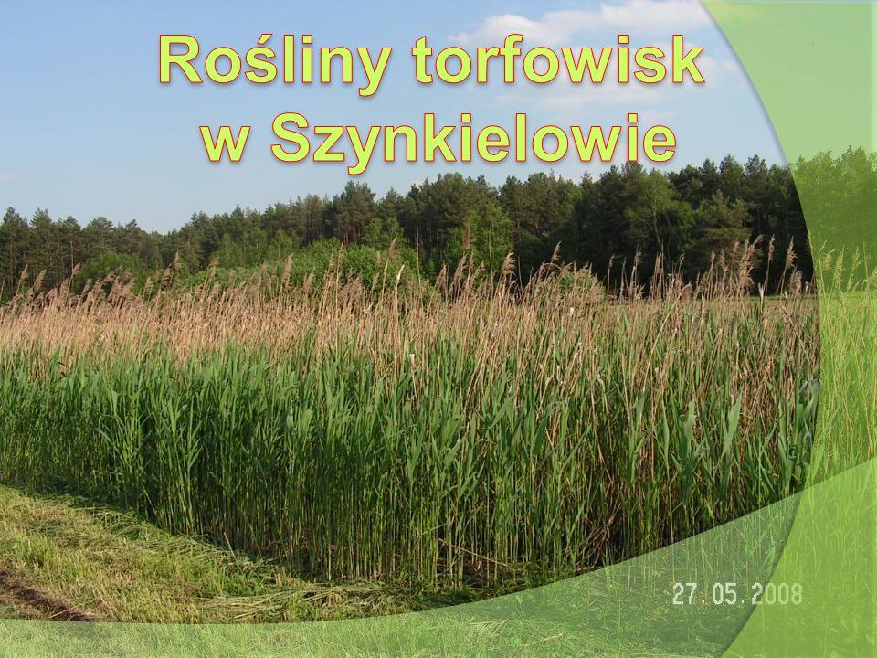 Rośliny torfowisk w Szynkielowie