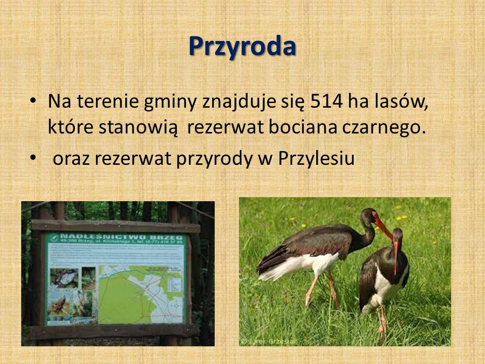Przyroda Na terenie gminy znajduje się 514 ha lasów, które stanowią rezerwat bociana czarnego.
