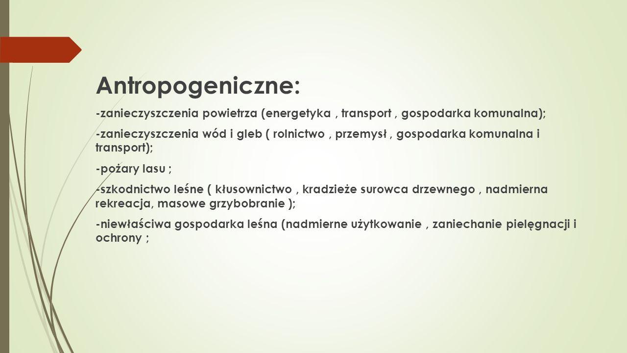 Antropogeniczne: -zanieczyszczenia powietrza (energetyka , transport , gospodarka komunalna);