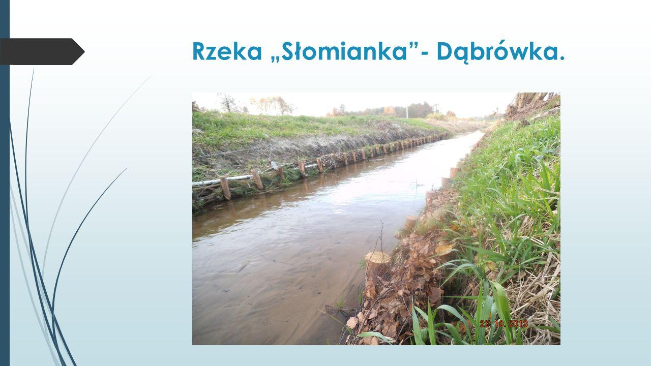 """Rzeka """"Słomianka - Dąbrówka."""