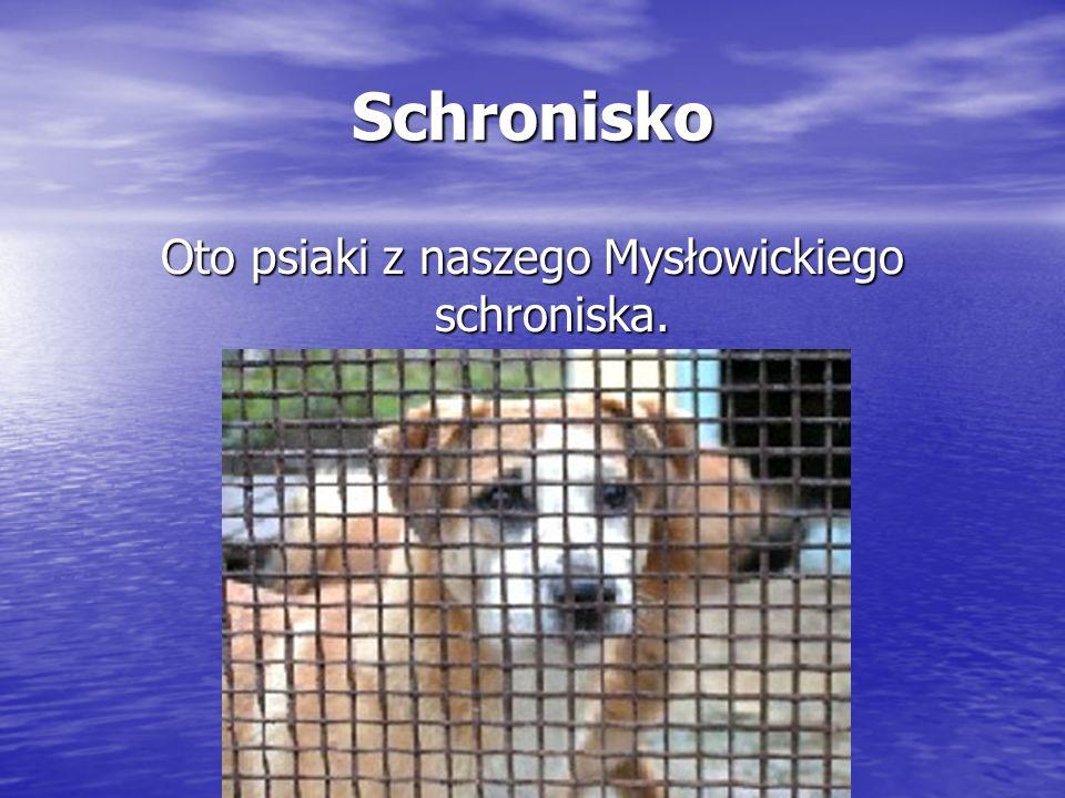Oto psiaki z naszego Mysłowickiego schroniska.
