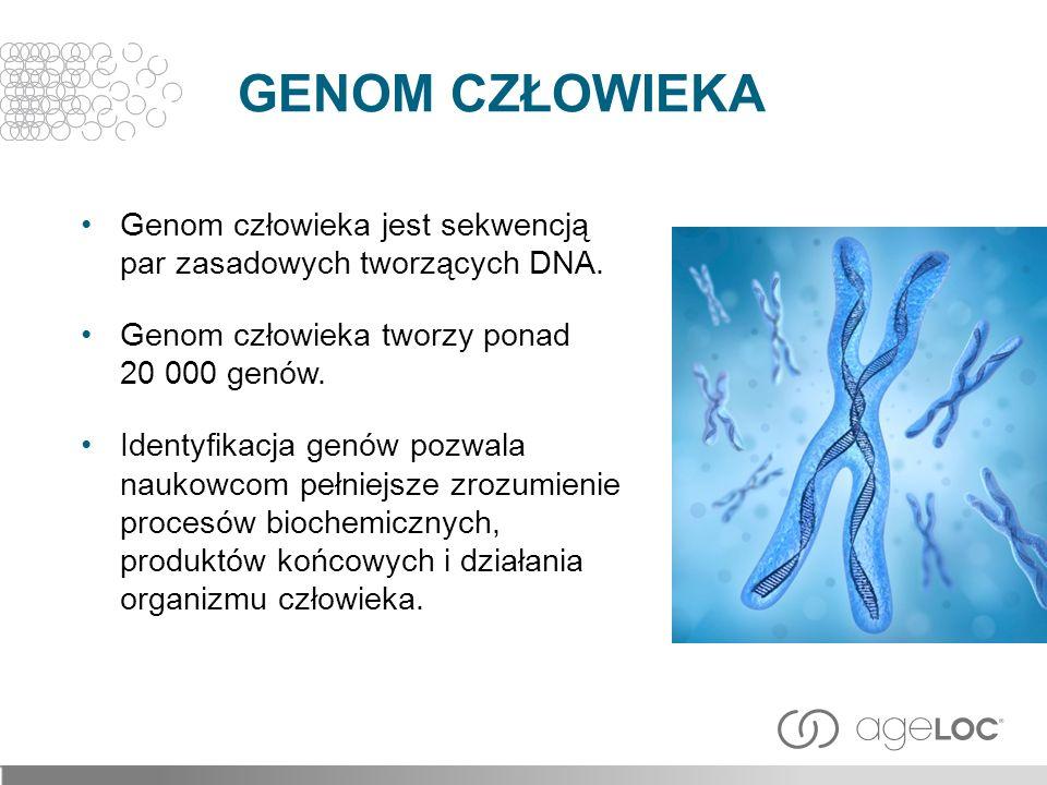 GENOM CZŁOWIEKA Genom człowieka jest sekwencją par zasadowych tworzących DNA. Genom człowieka tworzy ponad 20 000 genów.