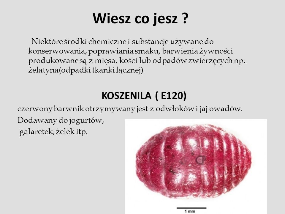 Wiesz co jesz KOSZENILA ( E120)