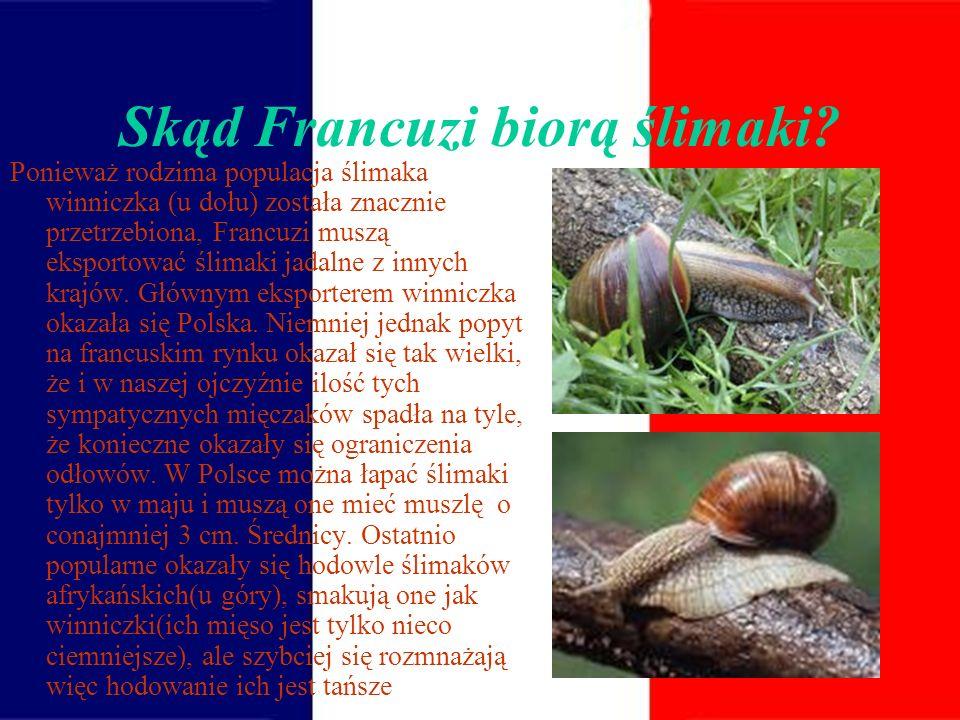 Skąd Francuzi biorą ślimaki
