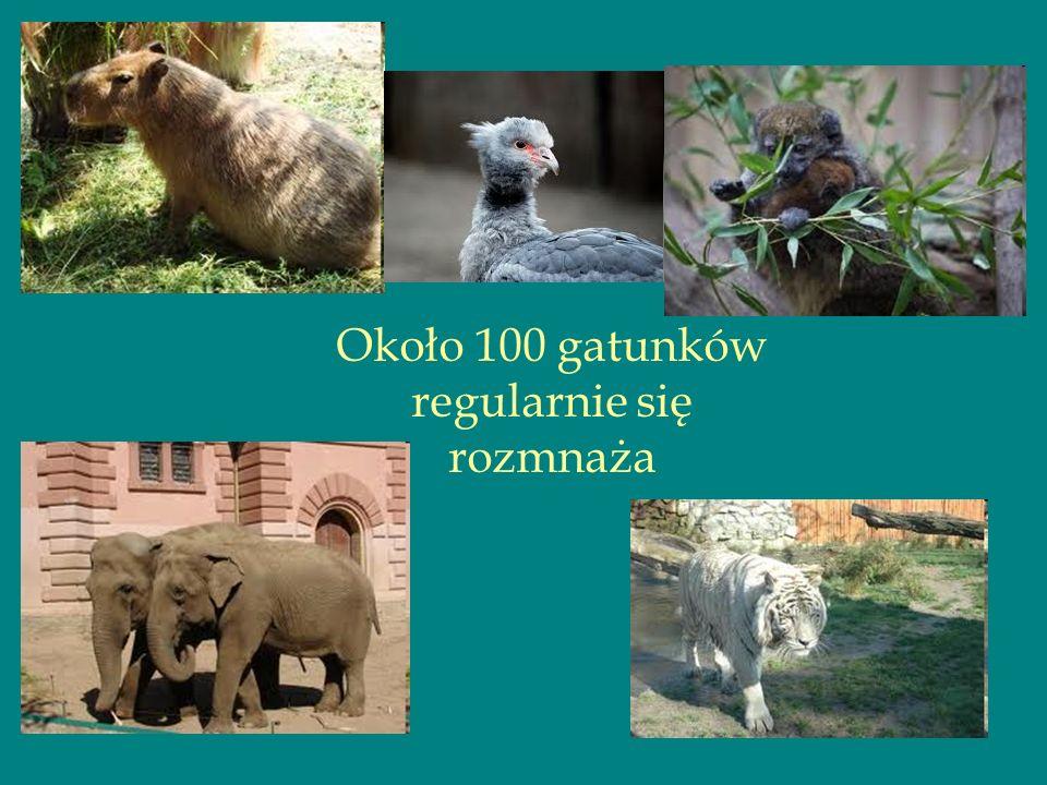 Około 100 gatunków regularnie się rozmnaża