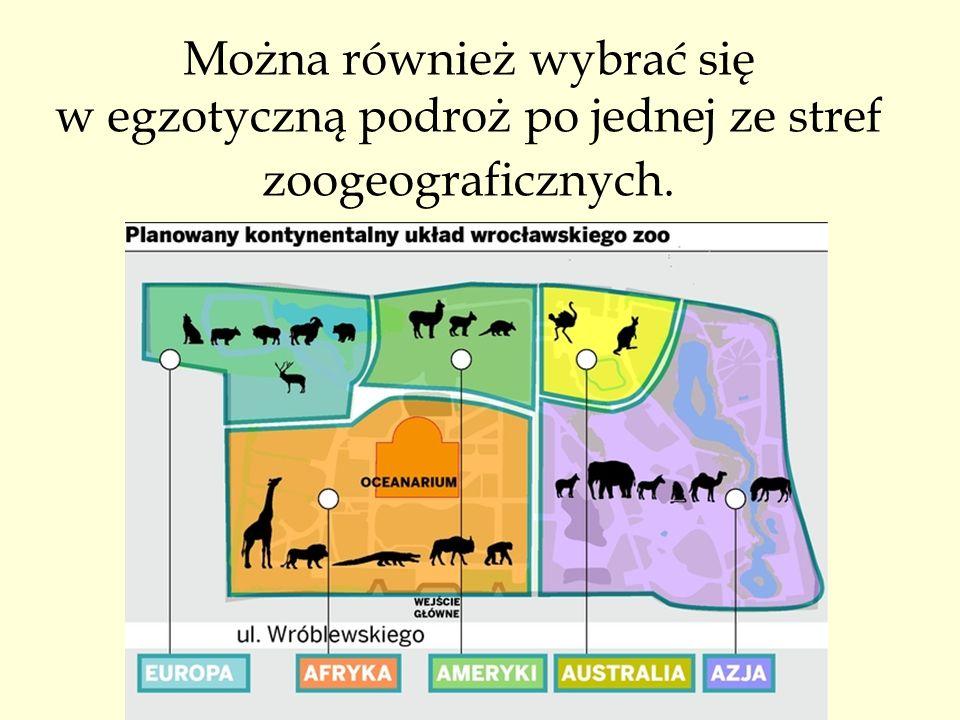 Można również wybrać się w egzotyczną podroż po jednej ze stref zoogeograficznych.