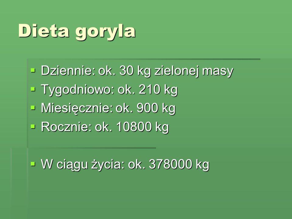 Dieta goryla Dziennie: ok. 30 kg zielonej masy Tygodniowo: ok. 210 kg
