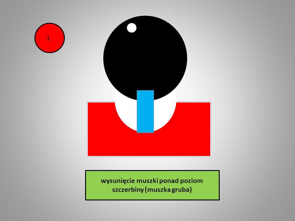 wysunięcie muszki ponad poziom szczerbiny (muszka gruba)