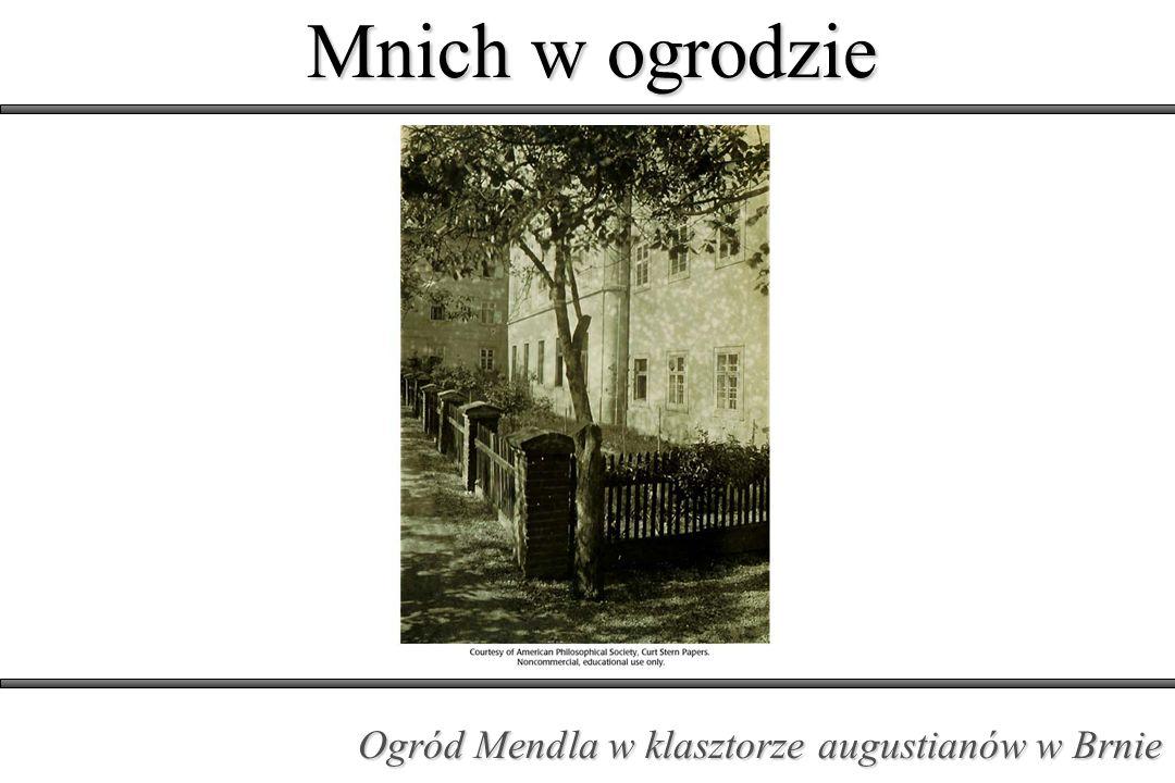 Mnich w ogrodzie Ogród Mendla w klasztorze augustianów w Brnie