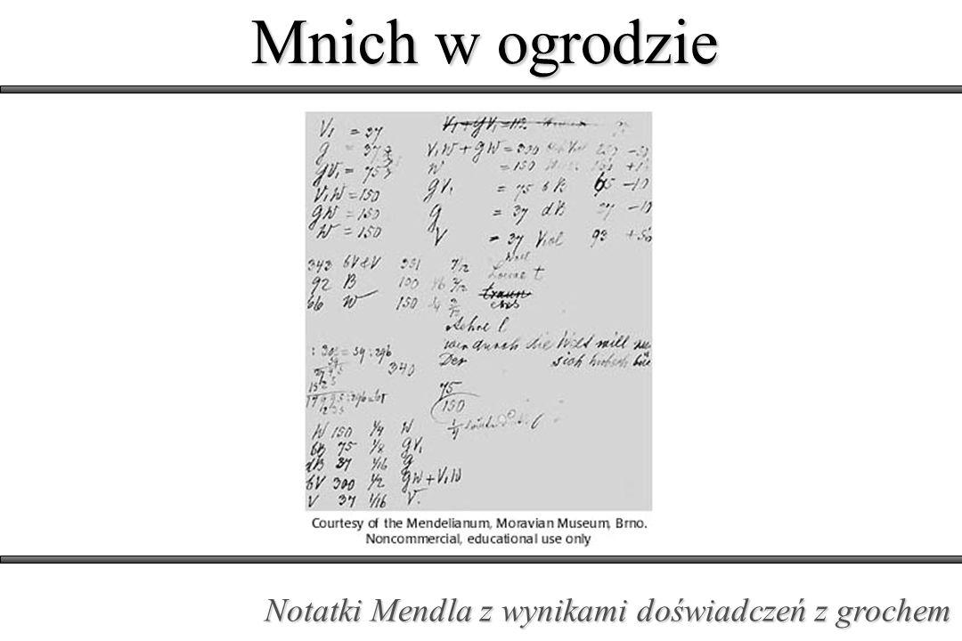 Mnich w ogrodzie Notatki Mendla z wynikami doświadczeń z grochem
