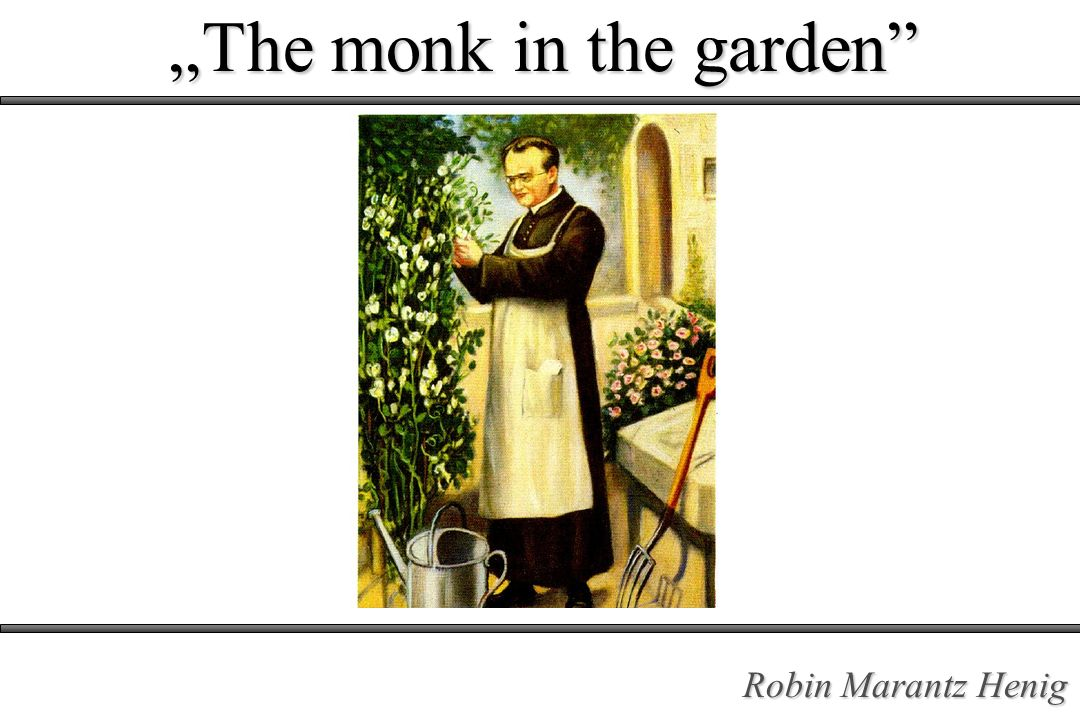 """The monk in the garden"