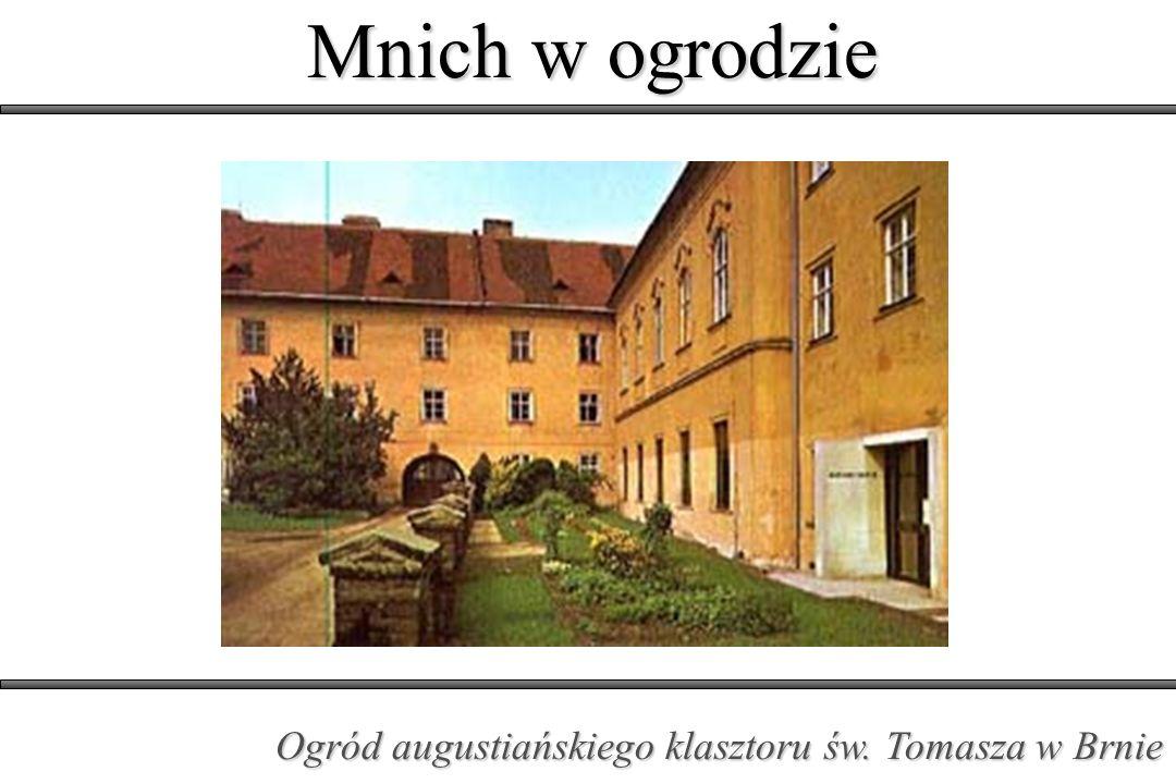 Mnich w ogrodzie Ogród augustiańskiego klasztoru św. Tomasza w Brnie