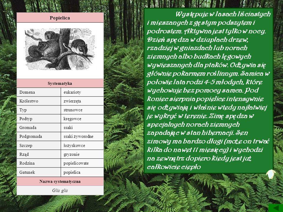 Występuje w lasach liściastych i mieszanych z gęstym podszytem i podrostem. Aktywna jest tylko w nocy. Dzień spędza w dziuplach drzew, rzadziej w gniazdach lub norach ziemnych albo budkach lęgowych wywieszanych dla ptaków. Odżywia się głównie pokarmem roślinnym. Samica w połowie lata rodzi 4-5 młodych, które wychowuje bez pomocy samca. Pod koniec sierpnia popielice intensywnie się odżywiają i właśnie wtedy najłatwiej je wykryć w terenie. Zimę spędza w specjalnych norach ziemnych zapadając w stan hibernacji. Sen zimowy ma bardzo długi (może on trwać kilka do nawet 11 miesięcy) i wychodzi na zewnątrz dopiero kiedy jest już całkowicie ciepło