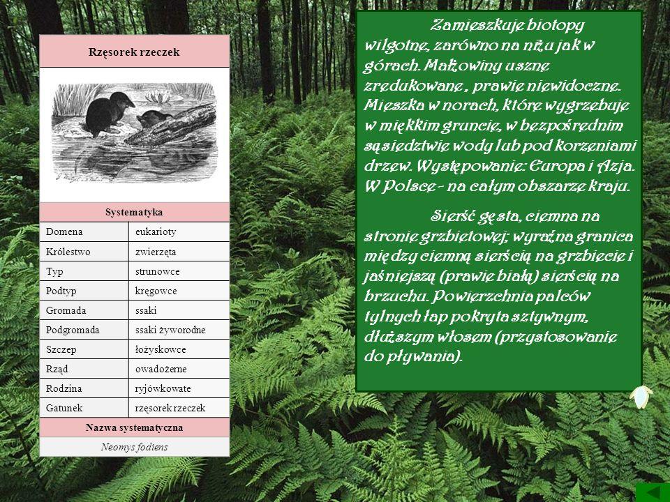 Zamieszkuje biotopy wilgotne, zarówno na niżu jak w górach